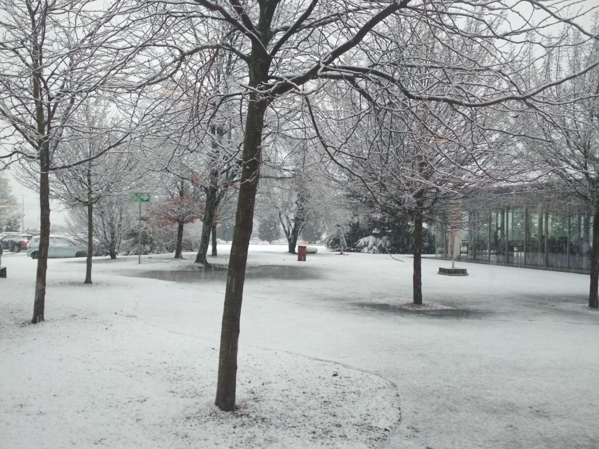 Snow-covered beauties at CERN